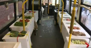 a city transit bus that is refitted as a produce market