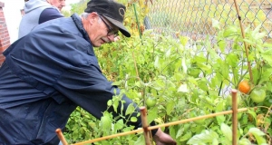 Man reaching over a raised garden bed to pick vegetables