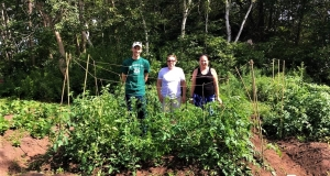 Volunteers in a garden set up tomato trellises